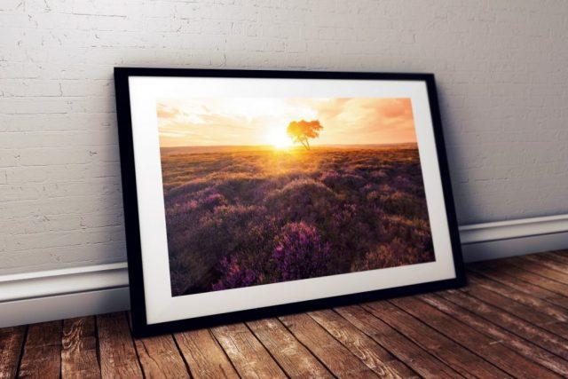 Egton-Moor-Lone-Tree-North-Yorkshire