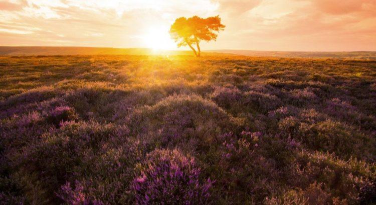 Lone Tree - Egton Moor