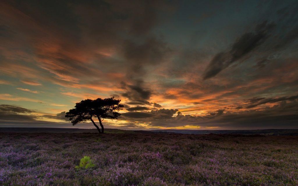 Lone Tree - Egton Moor, after sunset.