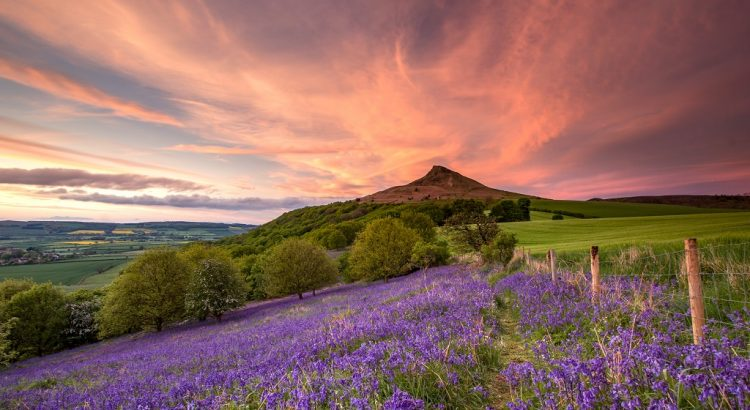 Sunset over the bluebells at Roseberry Topping, North Yorkshire