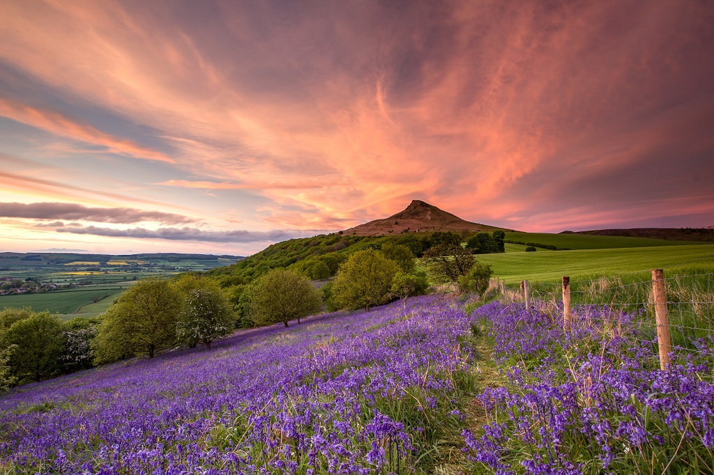 Sunset bluebells at Roseberry Topping, Newton under Roseberry, North Yorkshire.