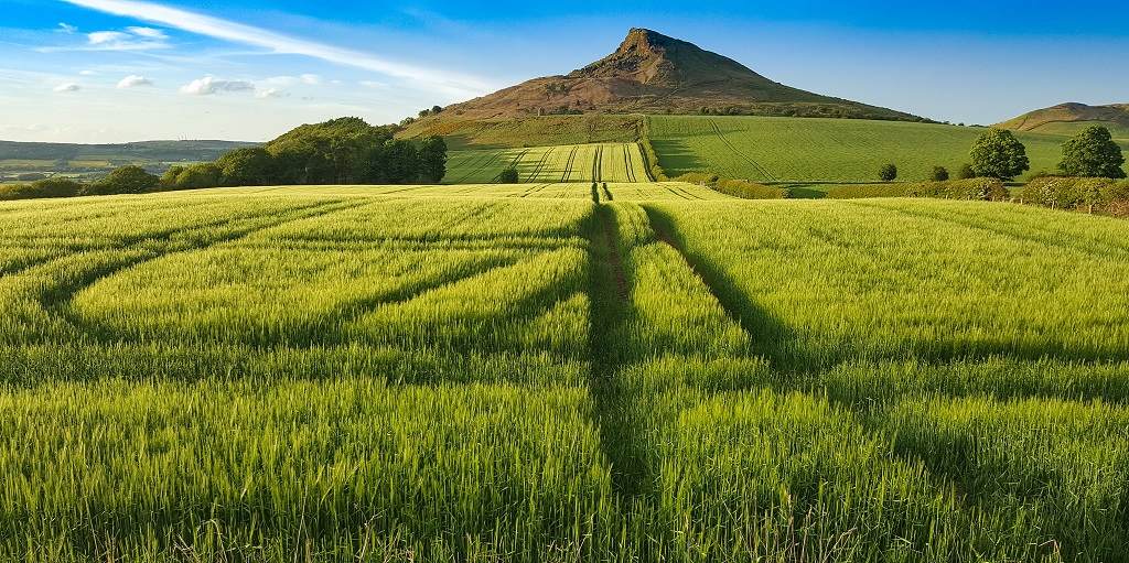 Roseberry Topping and Little Roseberry from Aireyholme Farm's Barley Field