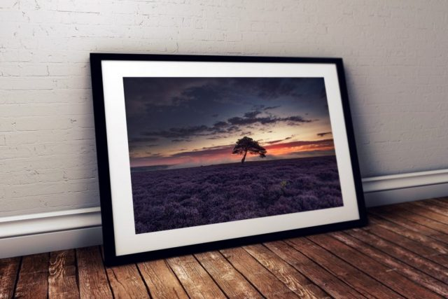 Lone Tree Egton High Moor - North Yorkshire