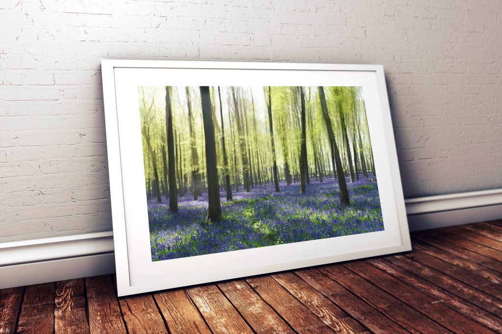 Bluebells-Dockey-Wood