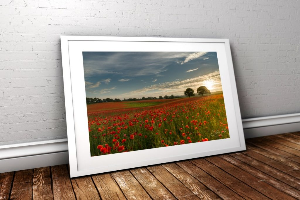 A sea of poppies at Aydon Castle, Northumberland. Coming soon to my store.