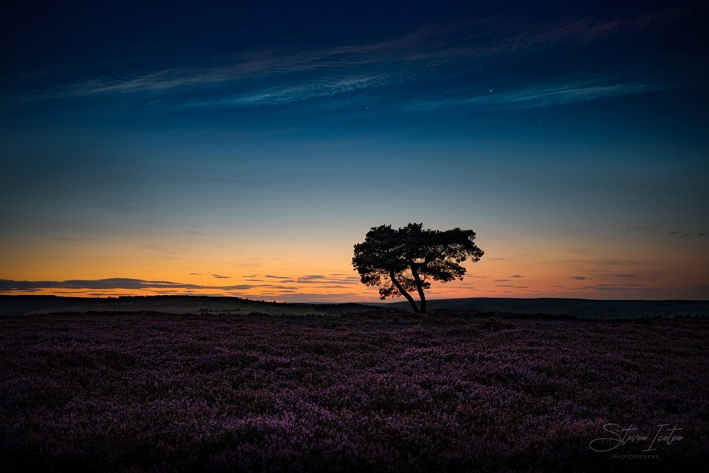 The Lone Tree on Egton Moor at twilight.